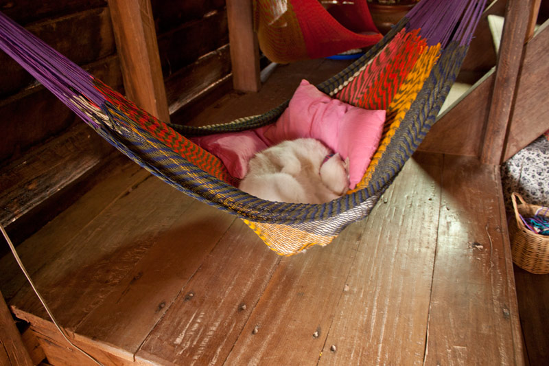 Cat in hammock shop Koh Lanta Thailand