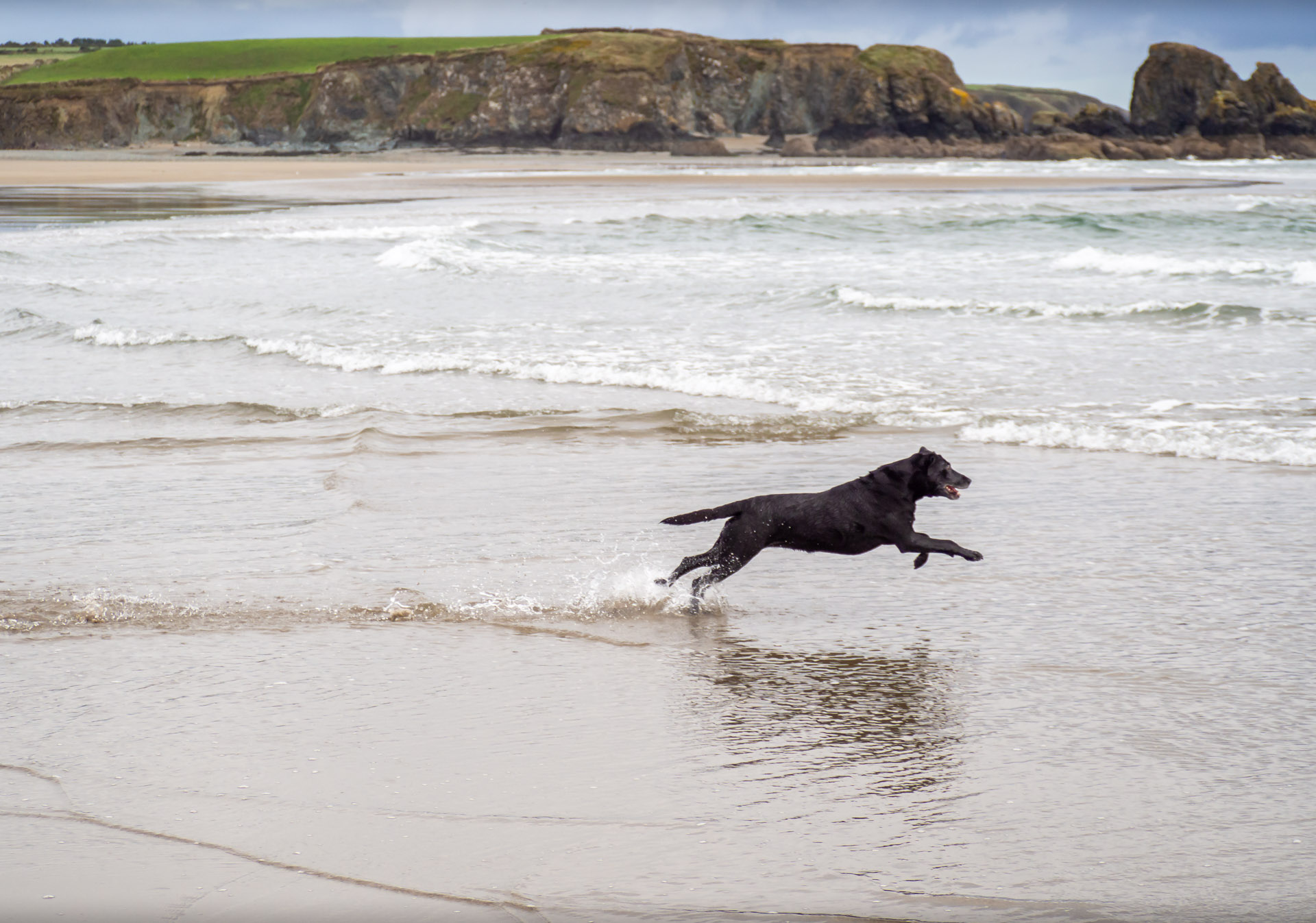 Dog Running on Bunmahon Beach Waterford